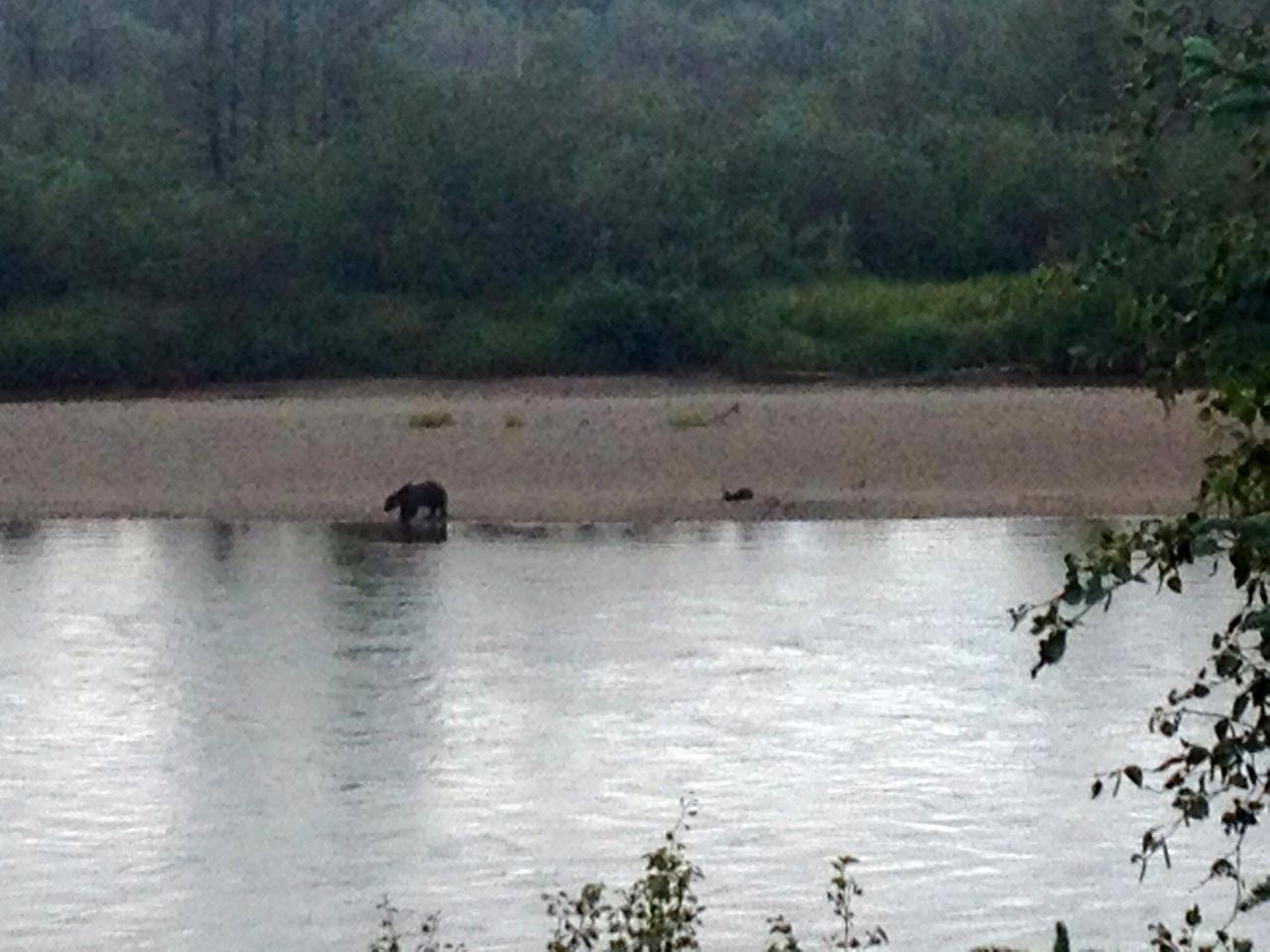 bear-across-from-lodge
